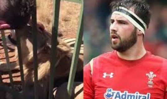 Ospreys and Wales Hooker Scott Baldwin Apologises to Fans Following Lion Bite Attack